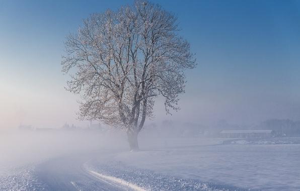 Картинка зима, дорога, снег, туман, дерево, утро, морозно
