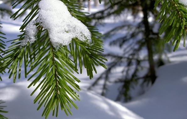 Картинка зима, макро, снег, иголки, ветка, хвоя