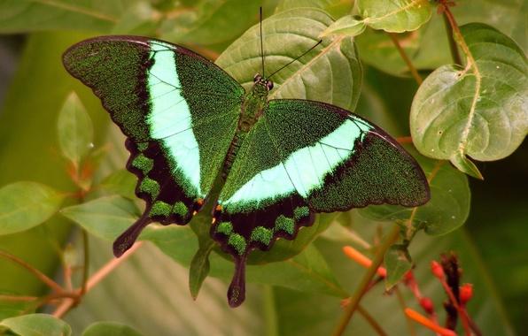 Картинка зелень, бабочка, листики