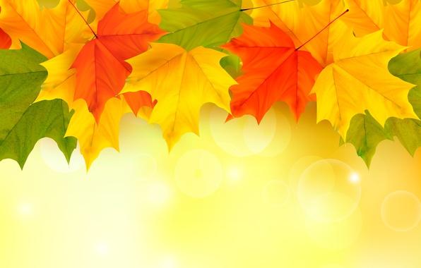 Картинки большого разрешение коты в осенних листьях