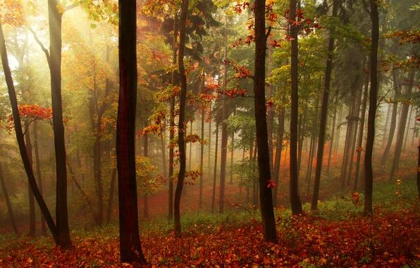 Картинка осень, лес, листья, лучи, деревья, пейзаж, природа, красиво