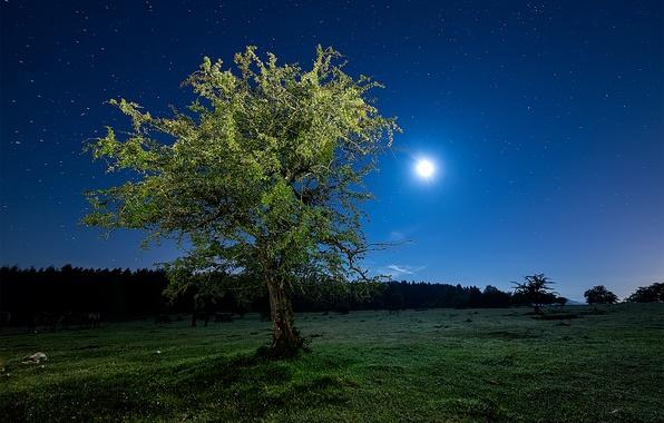 Картинка поле, небо, трава, звезды, свет, ночь, дерево, Луна