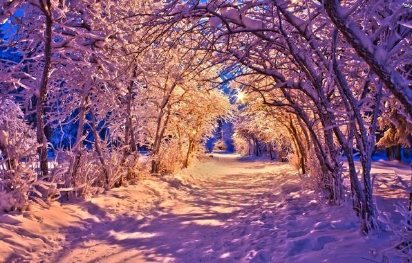 Картинка зима, дорога, лес, снег, деревья, пейзаж, природа, lights, огни, парк, фонари, white, forest, road, trees, …