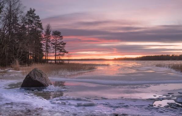 Картинка зима, деревья, закат, камень, залив, Финляндия, Finland, Финский залив, Ruonala, Gulf of Finland, Котка, Kotka, …