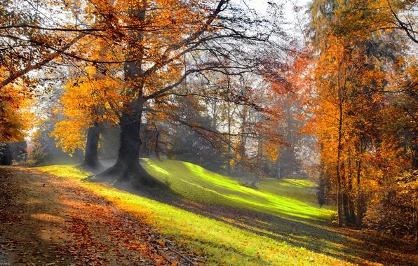 Картинка дорога, лес, трава, солнце, деревья, пейзаж, природа, grass, forest, road, trees, landscape, nature, солнечные лучи, …