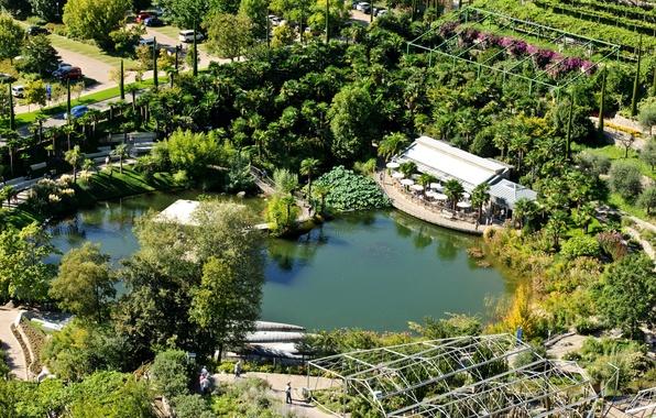 Картинка деревья, пруд, парк, пальмы, сад, Италия, вид сверху, Trauttmansdorff Castle Gardens