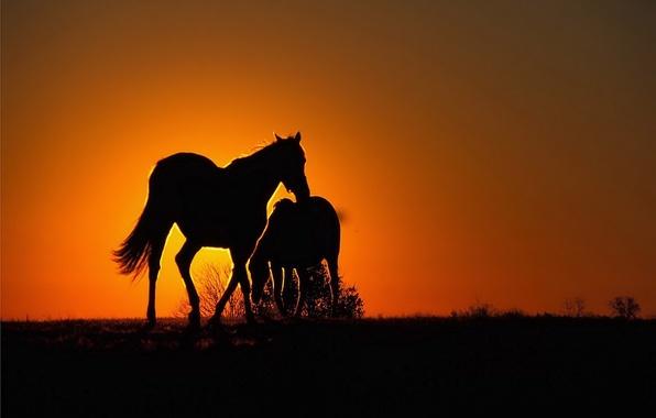 Картинка закат, оранжевый, Лошади