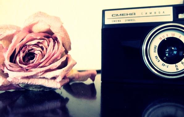 Картинка роза, Цветы, фотоаппарат