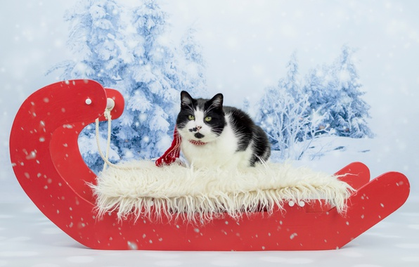 Картинка зима, лес, кошка, кот, взгляд, снег, красный, черно-белый, новый год, портрет, рождество, ели, пятна, лежит, …