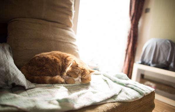 Кот и уют в доме