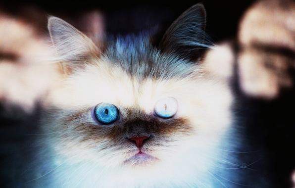 Картинка кошка, животные, глаза, кот, морда, солнце, лучи, свет, кошки, фон, widescreen, обои, wallpaper, мордашка, широкоформатные, …