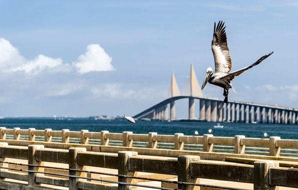 Картинка вода, мост, голубой, птица, лодка, рыба, облако, Флорида, залив, USA, США, Bridge, Saint, bird, blue, …