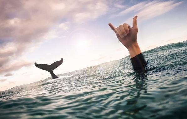 Картинка море, небо, облака, рука, кит, хвост