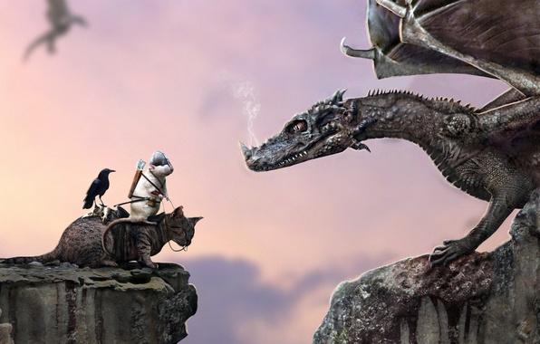 Картинка кот, скала, обрыв, дракон, юмор, шлем, всадник, ворон, стрелы, крыса, верхом
