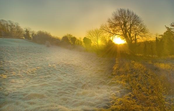 Картинка иней, трава, солнце, лучи, свет, деревья, рассвет, поляна, Англия, утро