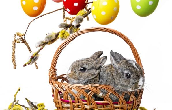 Картинка цветы, ветки, корзина, весна, colorful, пасха, кролики, верба, rabbit, flowers, spring, пасхальный, eggs, easter, bunny, …