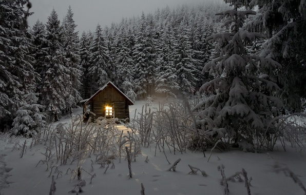 Картинка зима, лес, свет, снег, деревья, домик, сумерки