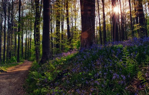 Картинка лес, солнце, лучи, свет, деревья, цветы, природа, блки