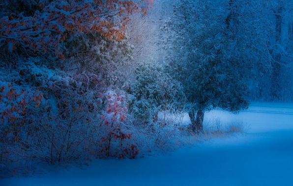 Картинка листья, снег, деревья, парк, вечер, желтые, снегопад