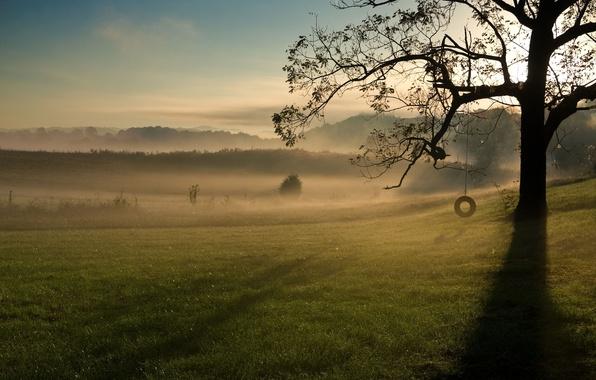Картинка зелень, небо, трава, листья, облака, ветки, природа, фон, качели, дерево, widescreen, обои, листва, колесо, wallpaper, …