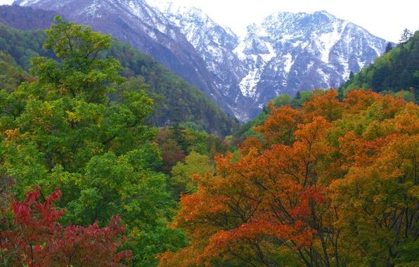 Картинка осень, лес, горы, природа, Япония