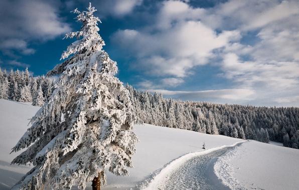 Картинка зима, дорога, лес, небо, снег, деревья, елка, ель