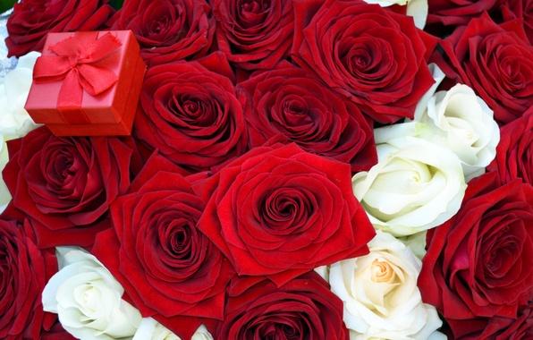 Картинка цветы, розы, букет, красная, коробочка, предложение