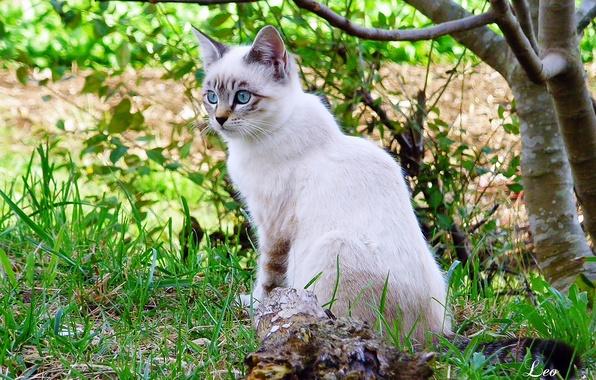 Картинка кошка, трава, ветки, дерево, белая, Leo Margareto