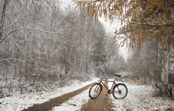 Картинка осень, лес, снег, велосипед