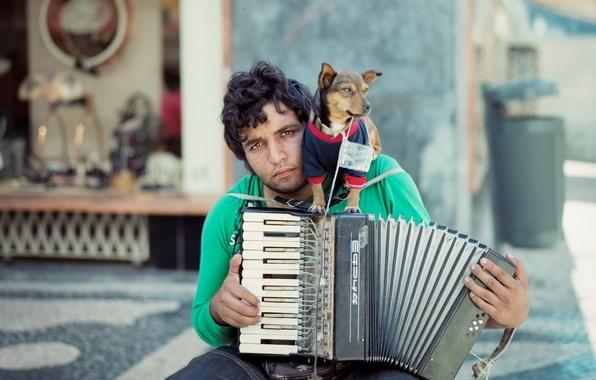 Картинка музыка, собака, музыкант