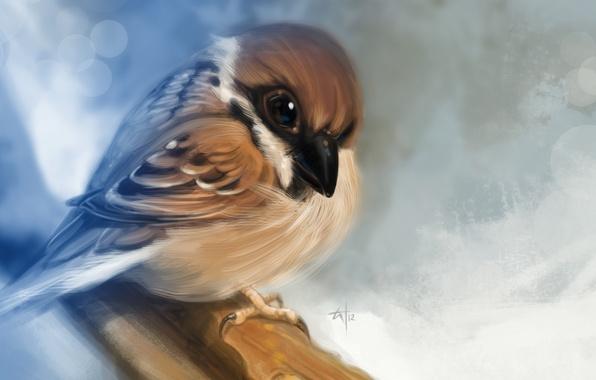 Картинка макро, птица, ветка, арт, воробей