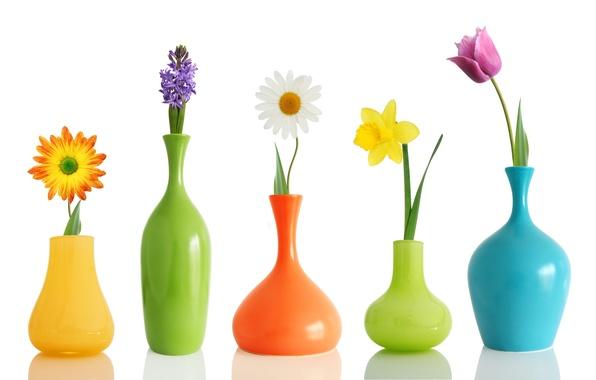 Картинка цветы, тюльпан, ромашка, нарцис