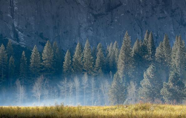 Картинка лето, трава, свет, деревья, природа, туман, скала, гора, утро