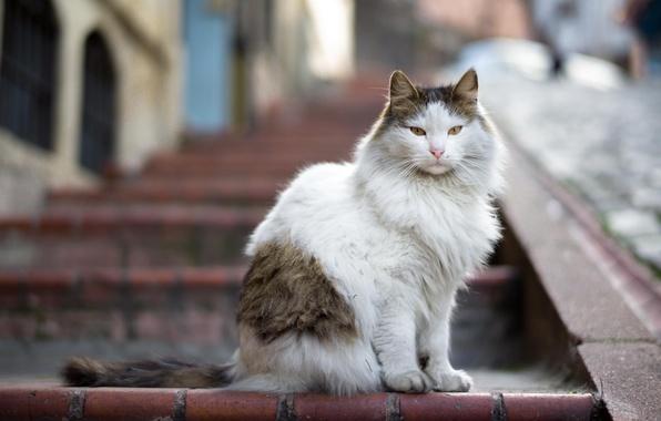 Картинка взгляд, шерсть, Кот, лестница