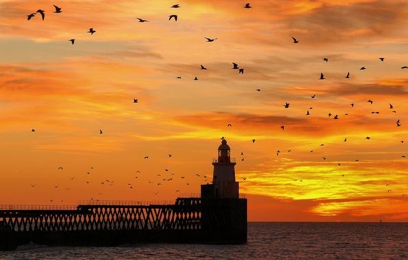 Картинка небо, пейзаж, закат, птицы, мост, маяк