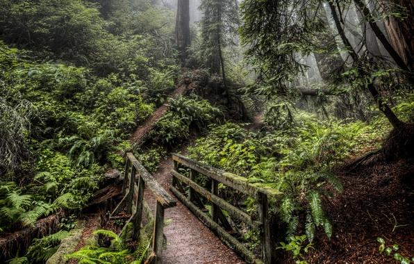 Картинка дорога, лес, мост, природа