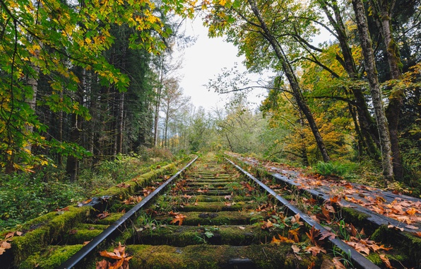 Картинка autumn, railway, abandoned, fall, railroad, decay