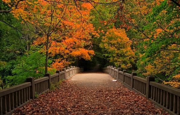 Прогулка осень картинки