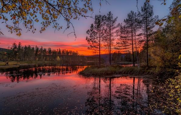 Картинка осень, листья, деревья, закат, ветки, Норвегия, речка, Jorn Allan Pedersen