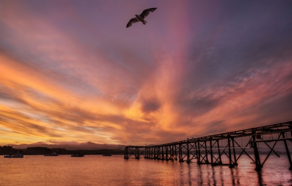 Картинка море, закат, мост, птица, чайка, Новая Зеландия, New Zealand, гавань