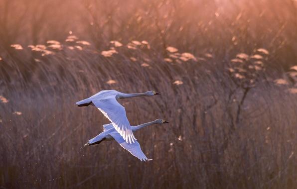 Картинка птицы, природа, полёт