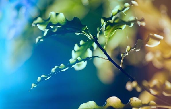 Картинка листья, макро, природа, ветка, blur