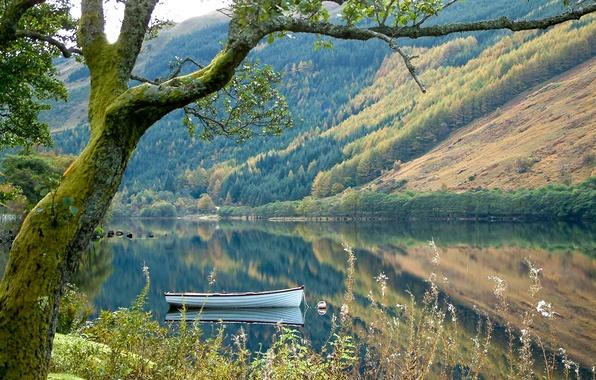 Картинка лес, трава, горы, природа, озеро, дерево, лодка