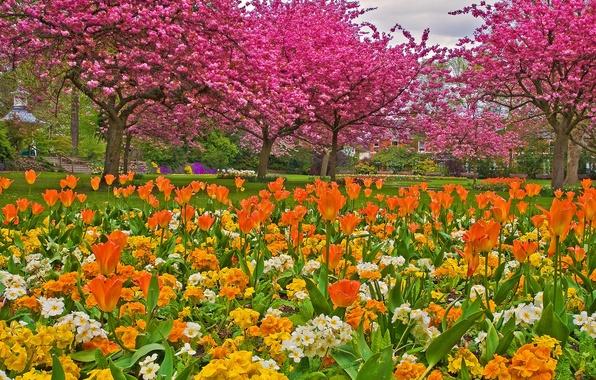 Картинка трава, деревья, цветы, парк, сад, тюльпаны