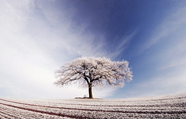 Картинка иней, поле, небо, облака, дерево