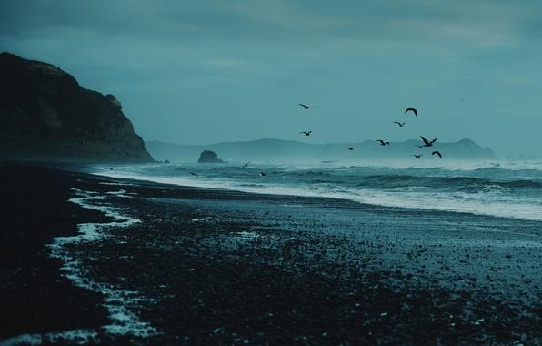 Картинка море, волны, пляж, скалы, чайки