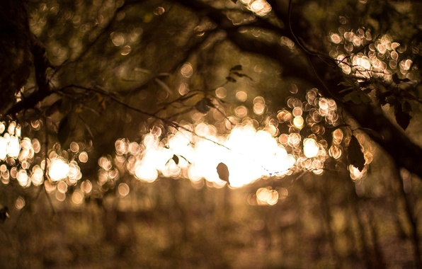 Картинка листья, макро, фон, дерево, widescreen, обои, размытие, размытость, wallpaper, широкоформатные, background, macro, боке, полноэкранные, HD …