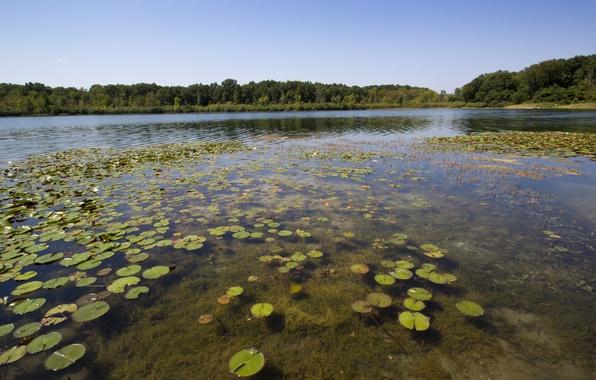 Картинка лес, листья, природа, пруд, болото, круглые, мель