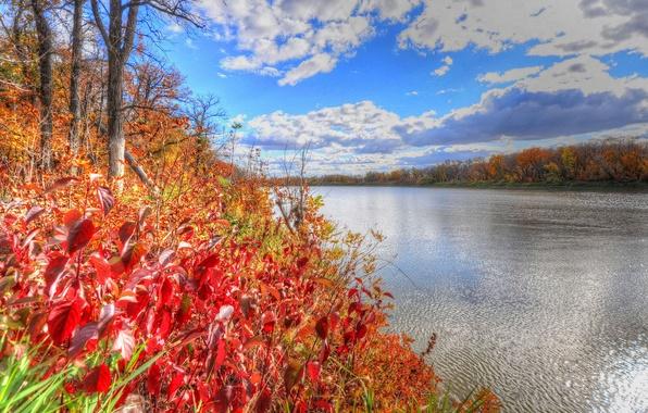 Картинка осень, лес, небо, листья, деревья, река, багрянец