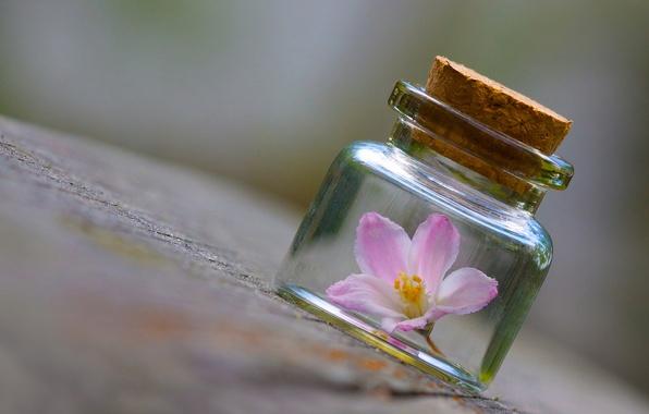 Картинка цветок, макро, поверхность, банка, баночка, пузырёк